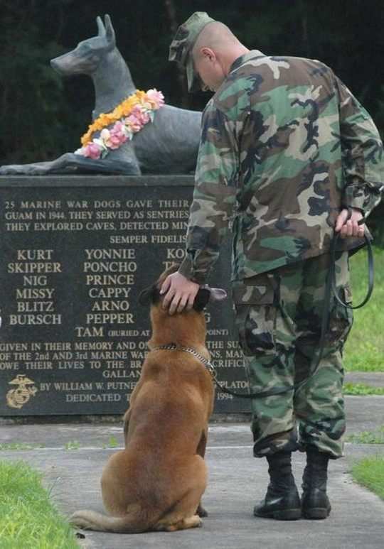dogs_in_army_11