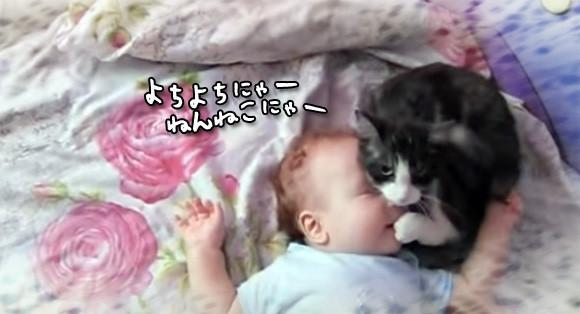 赤子が泣くと真っ先に駆けつけ、泣き止むまでずっと側に寄り添う猫のやさしさったら!