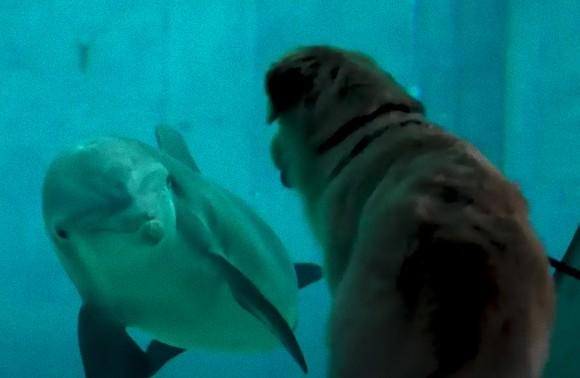 一目会ったその時から...水族館のイルカと犬の間に芽生えた友情物語(アメリカ)