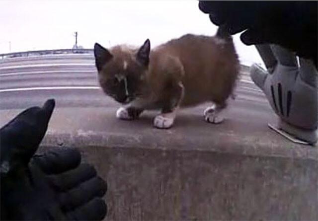 高速道路の中央分離帯で怯えていた猫を保護した警官、永遠の家族となる(アメリカ)