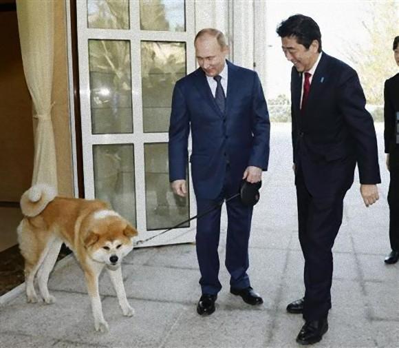 秋田犬とプーチン大統領