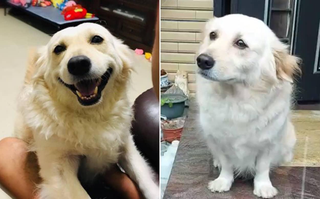 子犬の目で飼い主を引き留めようとする犬