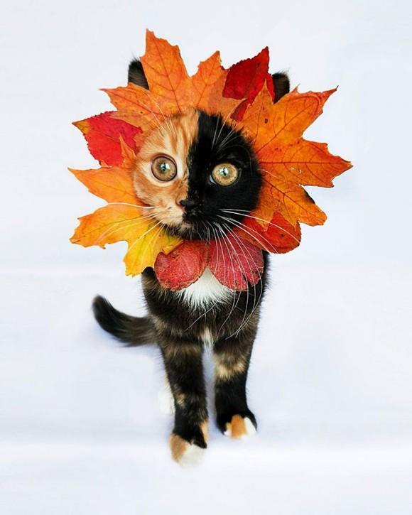 顔半分が違う柄。新たなるキメラテイストな猫は保護施設で里親を待っていた(ベラルーシ)