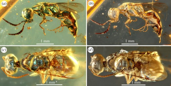insect3_e