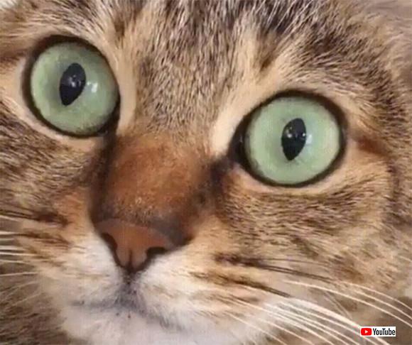 猫はしゃっくりすると瞳孔がパカッ!と開く