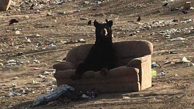 捨てられていたソファでしっぽり。ソファでのんびりするクマーが人間顔負けだと話題に