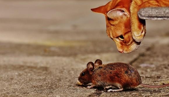 人と触れる機会が多いネズミは10年もしないうちに見た目が変化することが判明(スイス研究)