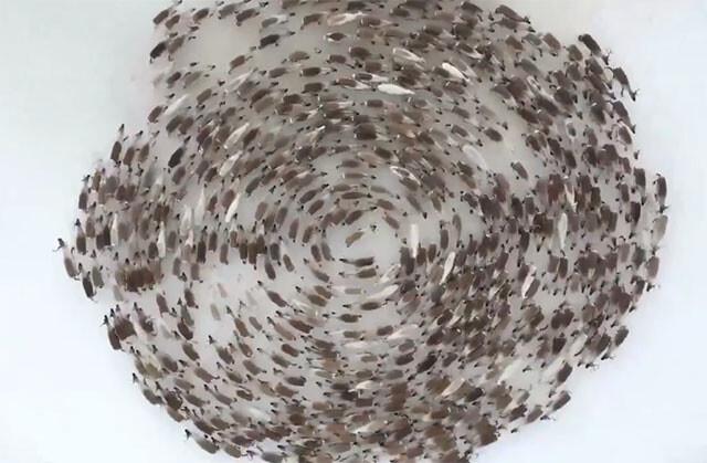 トナカイの大群が作りあげた巨大ミステリーサークル。円を描きながらクルクルと回転する圧巻の光景