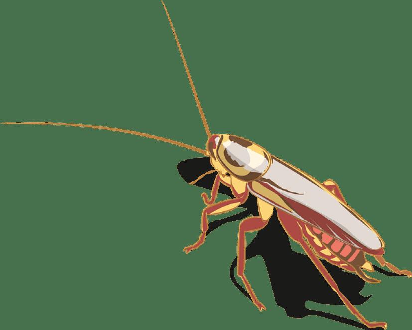 cockroach-5796611_640