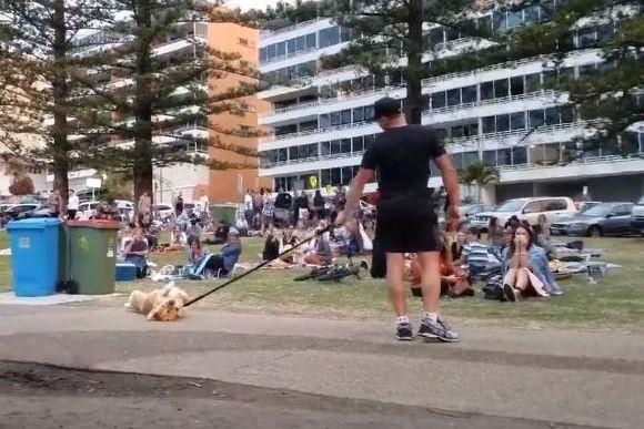 犬社会に横行している散歩から帰りたくないときの最終手段。「ザ・死んだふり」