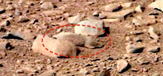 火星に小動物?NASAの火星画像にとらえられていた動物のようなもの