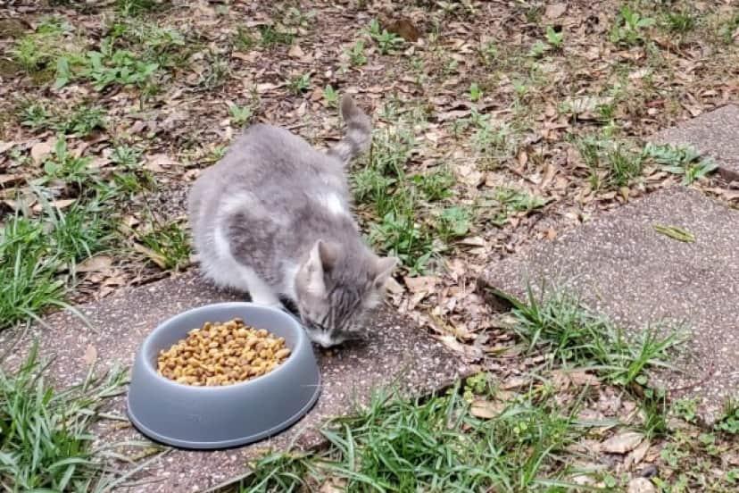stray cat1_e