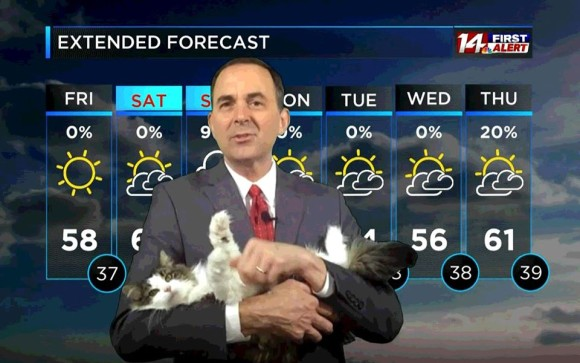 天気予報士が自宅からリモートワーク。放送を邪魔したのがきっかけで大人気となった「天気予報猫」(アメリカ)