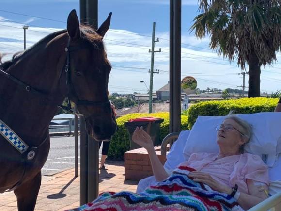 騎馬警官の最後の願いは馬に会うことだった