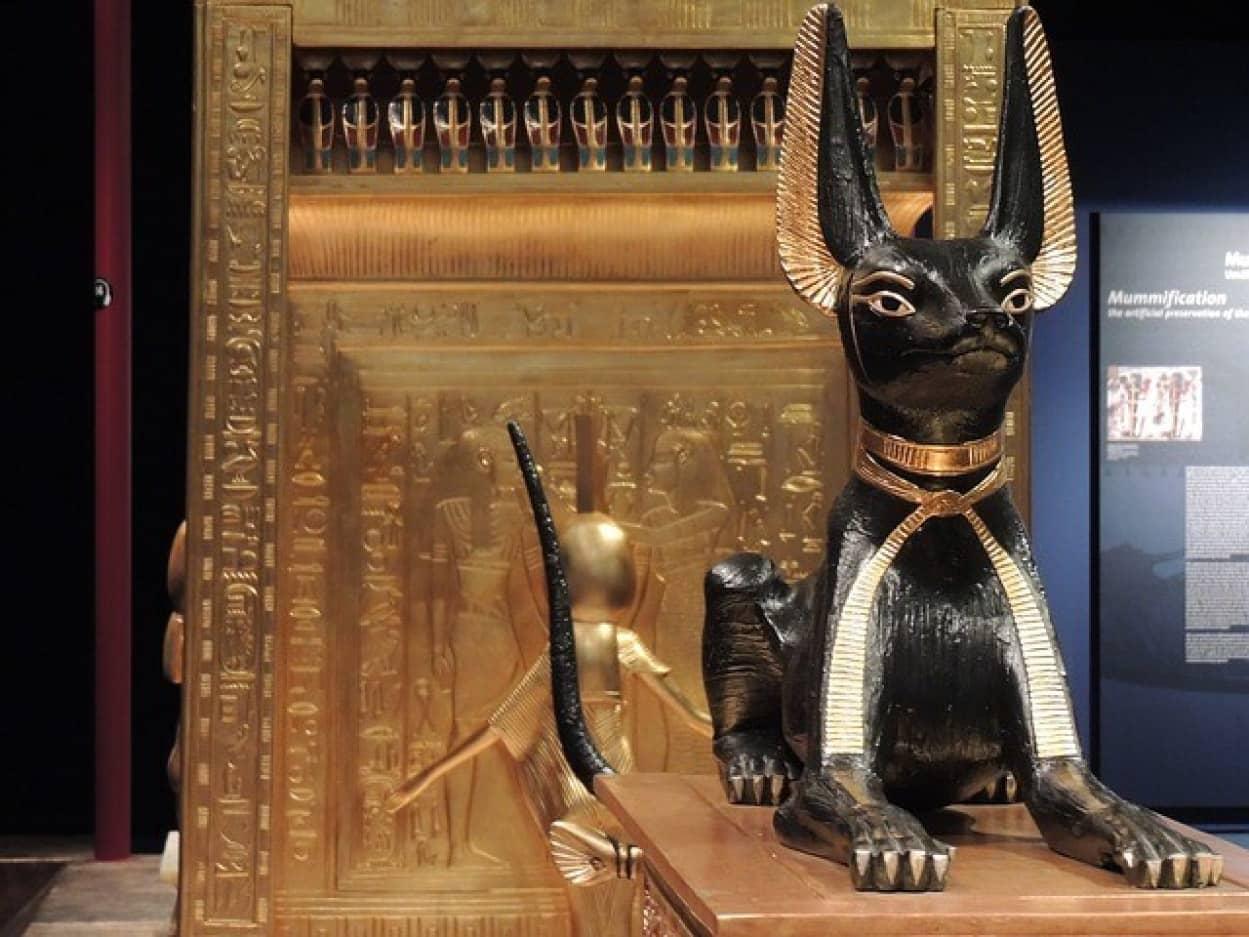 古代エジプト人が猫を愛した理由