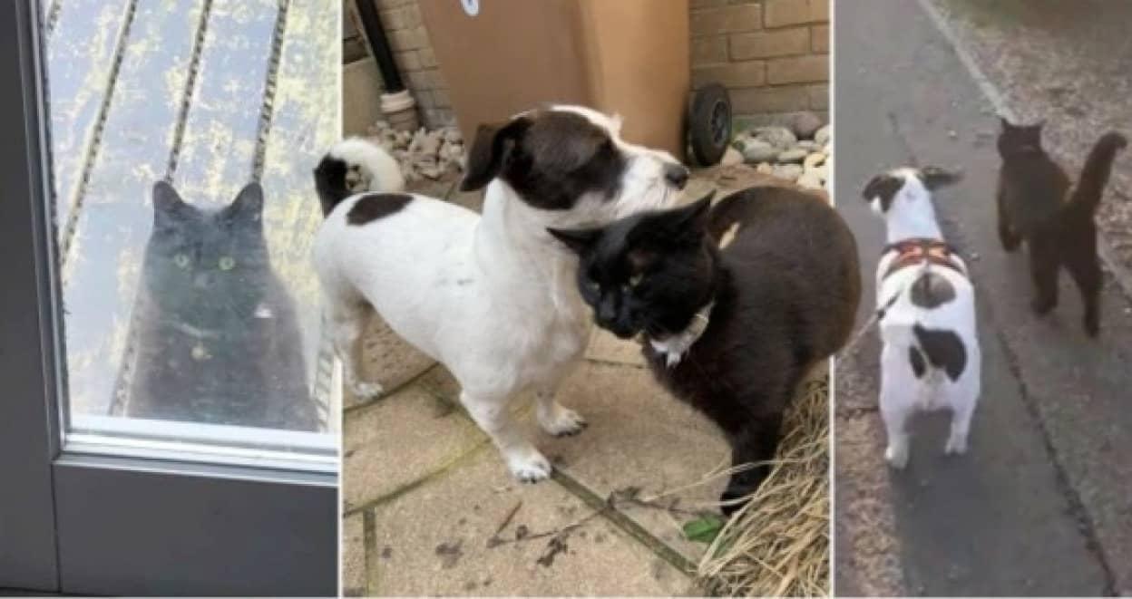 近所に住む猫と犬の友情物語