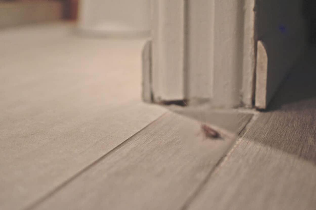 ゴキブリ嫌いの妻の為3年で18回引っ越しした夫婦