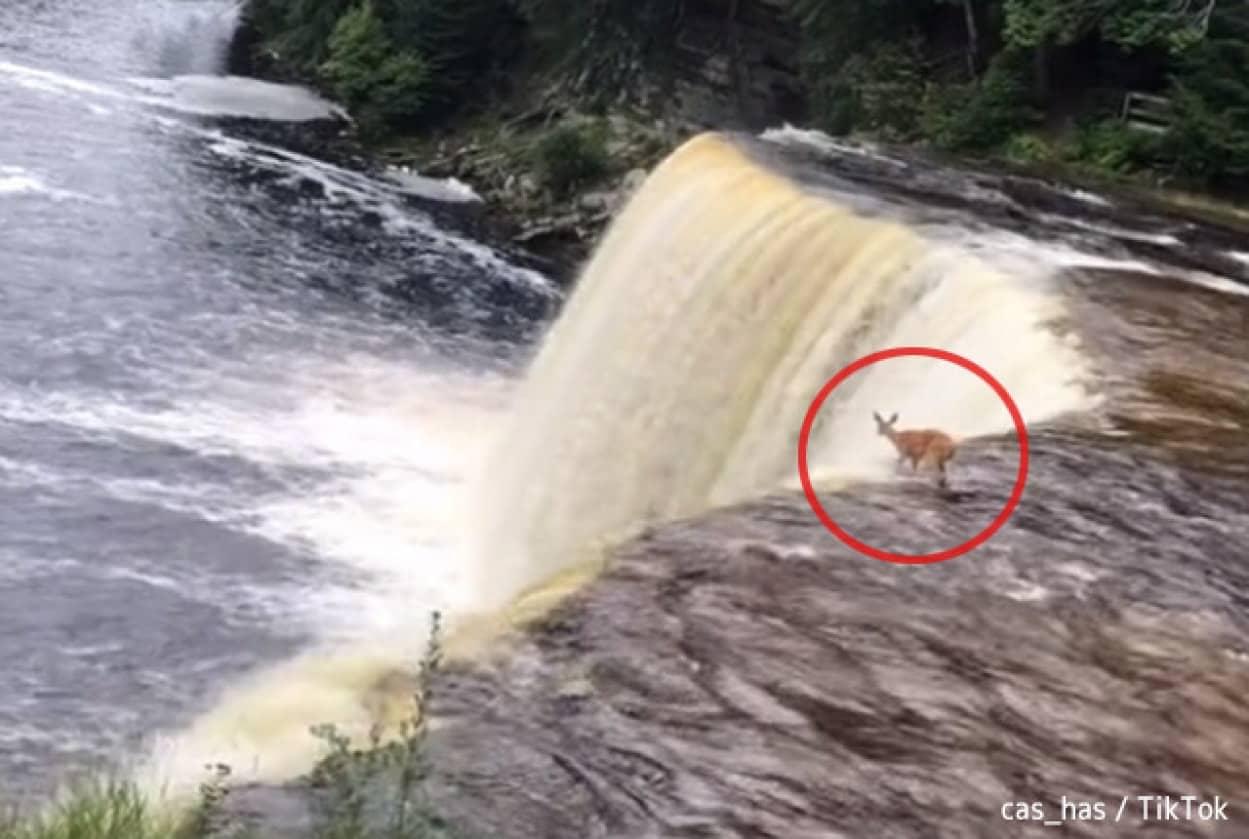 野生の鹿が自ら、滝の上から飛び降りるという仰天ニュース