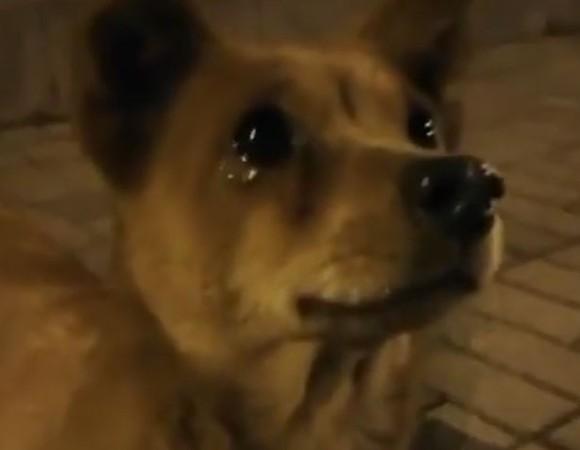 泣いているように見える犬。その涙のわけは?