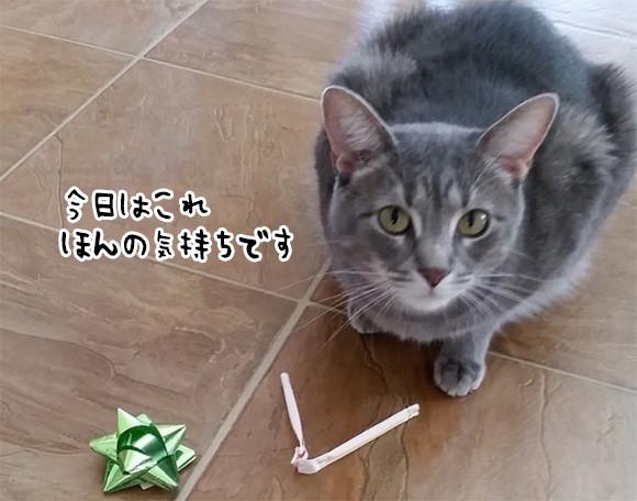 「今日はこれをあげます」毎日のつけとどけを欠かさない猫