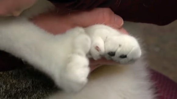 forepaws