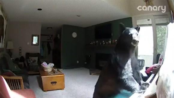 クマさんのコンサート会場はこちらです。民家に侵入してピアノを弾いたクマ、ついでに食べ物も頂戴するの巻