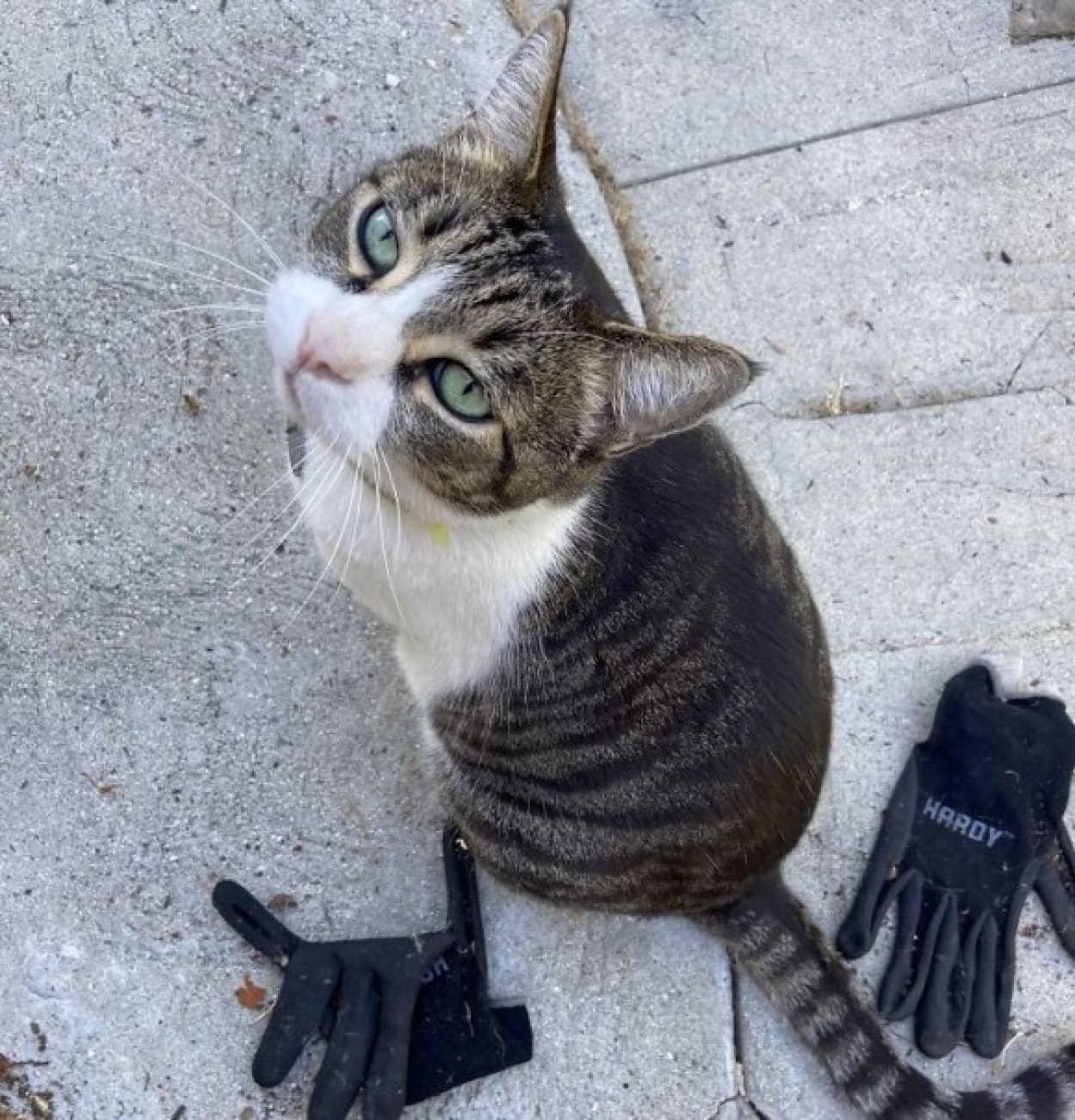 飼い主にプレゼントするために、近所で盗みを繰り返す猫