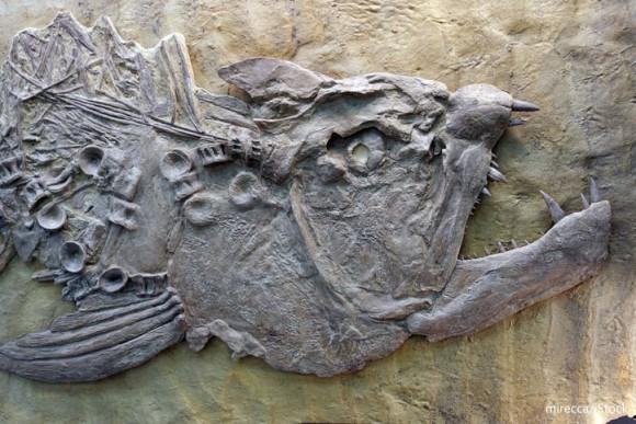 私たちの指は古代魚からの贈り物だった!?指が生えた先史時代の水中生物が発見される