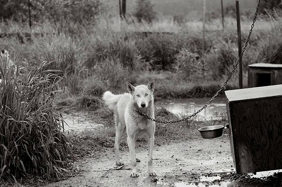 old_dogs_32