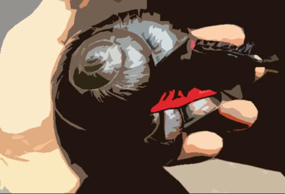 赤と黒のインパクトがすごい大型のカタツムリ「ファイヤー・スネイル」にズームイン!(マレーシア)
