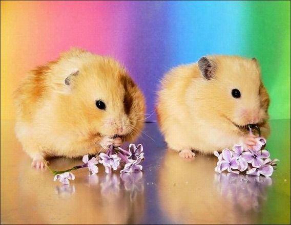 hamsters_04