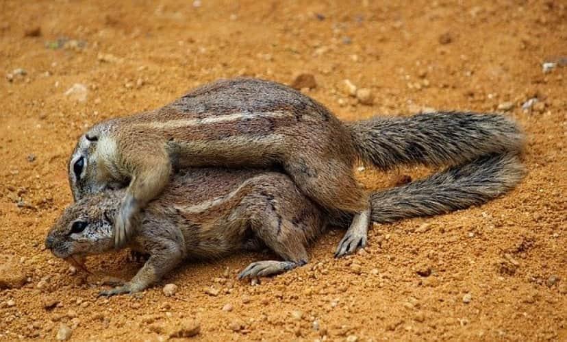 squirrels-4219839_640