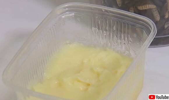 幼虫の脂肪を利用して作られた「昆虫バター」を開発中、そのお味は?(ベルギー)※昆虫出演中