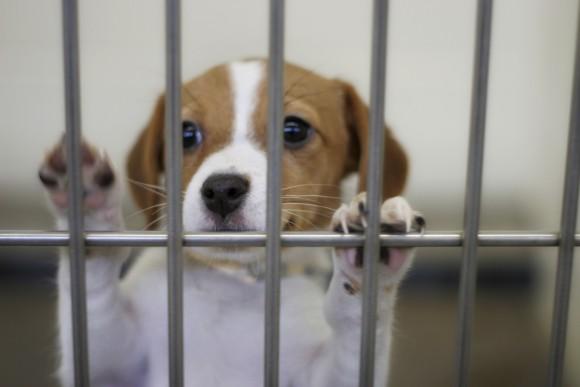 ペットショップで販売できるのは保護された動物のみ。アメリカで営利目的のブリーダー撲滅に向けた画期的な取り組みが始まる
