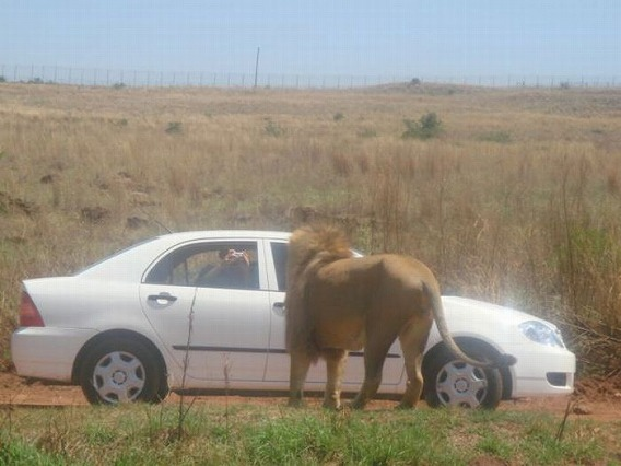 only_in_africa_21