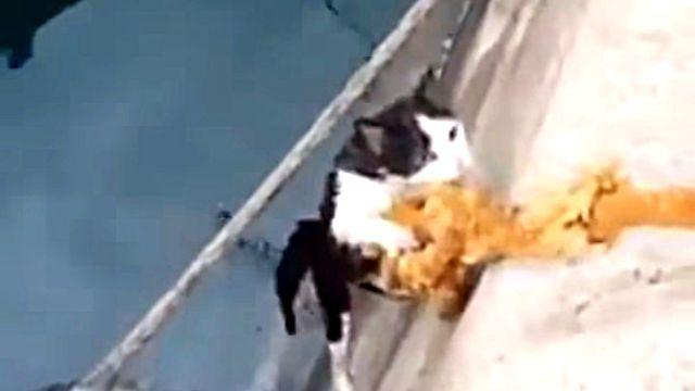 よし、今引き上げるからしっかりつかまってろよ!海に落ちた猫の救出劇