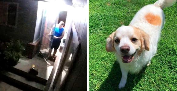 野良猫が助けを求めてやってきた。それにいち早く気づき家族に知らせた犬。猫は無事救われる。