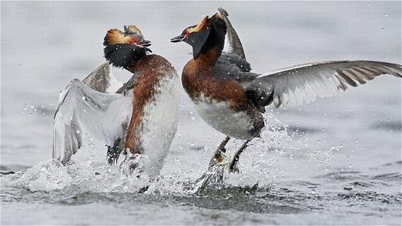 beautiful_photographs_of_birds_11