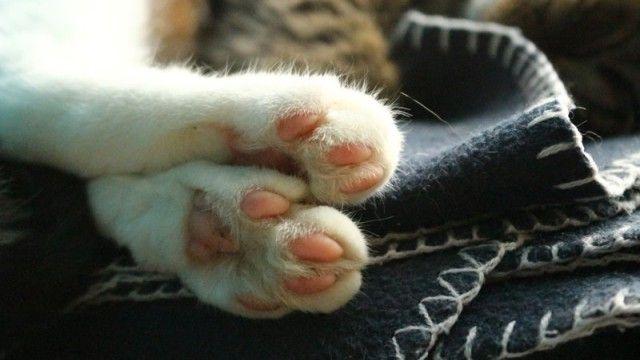 何人たりともこの足にはかなわない。猫の前足ちょこんがかわいすぎた