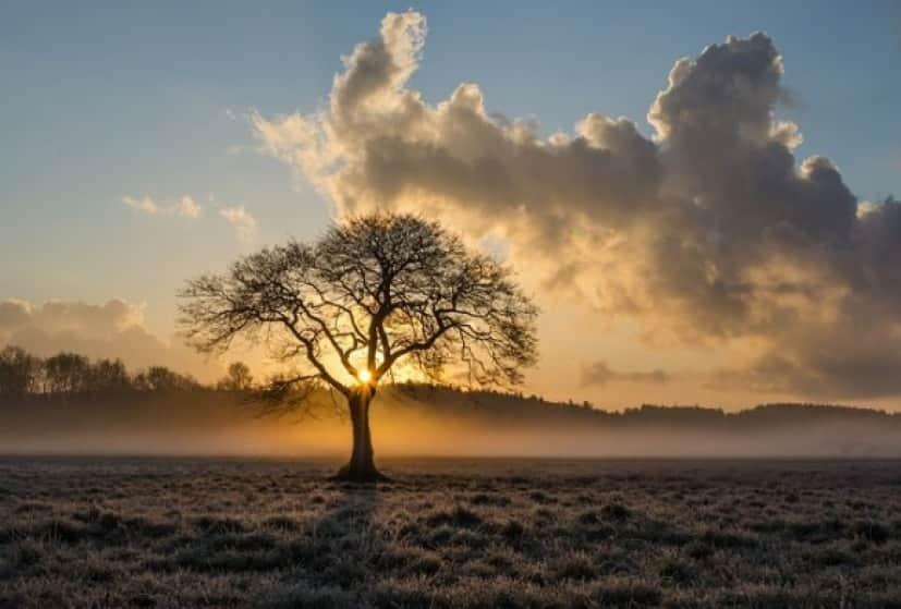 lone-tree-1934897_640_e