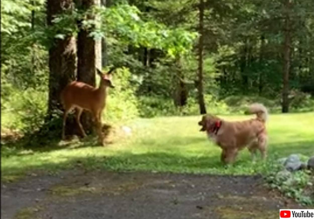 犬と鹿が仲良く追いかけっこ。いつのまにか芽生えた異種友情物語no title