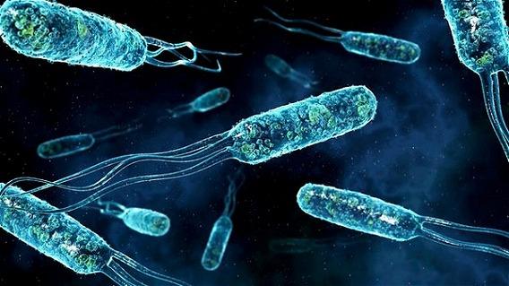 Microscop-Bacteria10