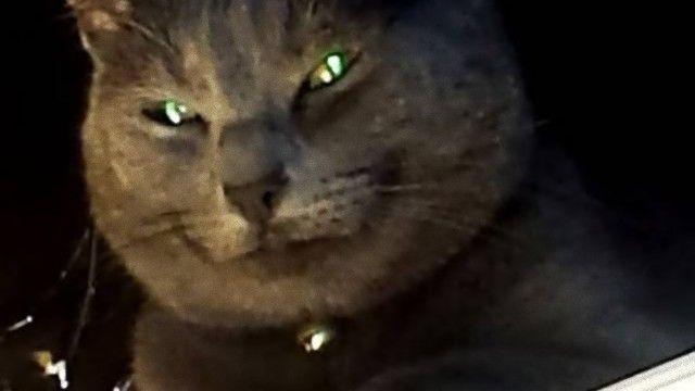 猫の真実を追求せよ。邪悪な影が見え隠れする猫のいる風景