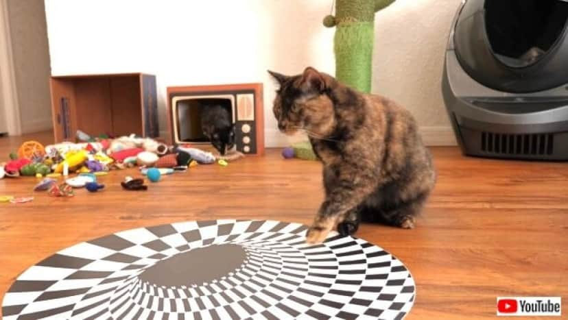 illusions3_640