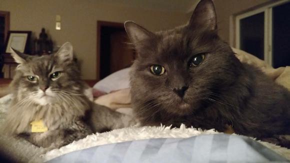 90歳になったおじいさんが飼っていた高齢の姉妹猫。紆余曲折を経て2匹一緒のハッピーライフ