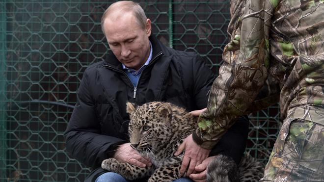 猛獣使いプーチン、ペルシャヒョウの子どもをてなずける。その後記者、襲われる。