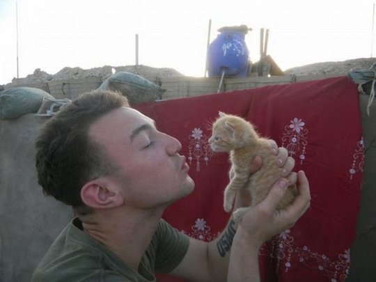 kittens_found_by_us_marines_in_afghanistan_09