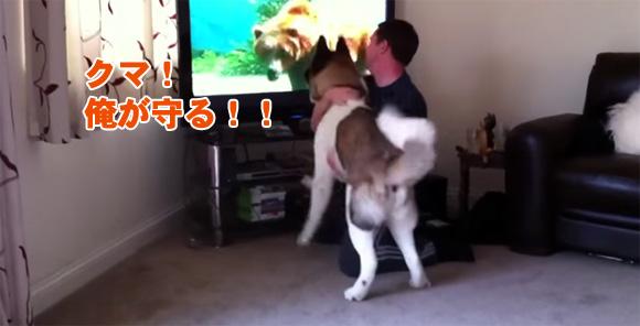 「クマだと!オレがなんとかする」。映画「ホワイトファング」でクマ登場シーンにいてもたってもいられない秋田犬