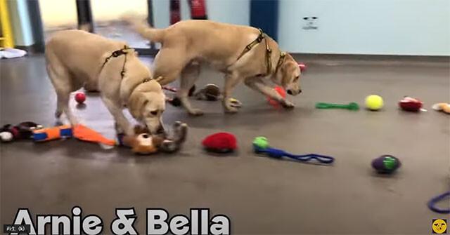 施設の犬たちへのクリスマスプレゼント