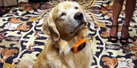 離れていても愛犬と会話ができる?犬専用スマート首輪「Scout 5000」が今年中に販売開始(アメリカ)